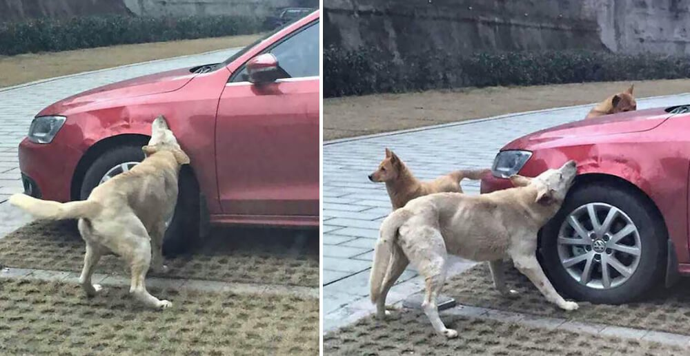 Man kicked a wandering dog. what the dog did afterwards is just genius!