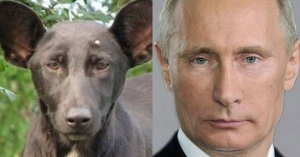 A dog was murdered by Russian secret service because it looked too much like Vladimir Putin
