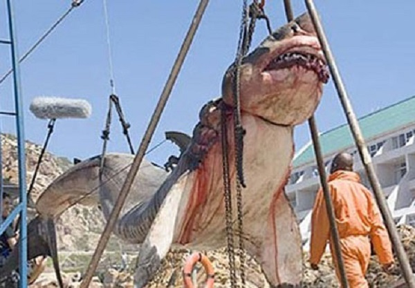 A Prehistoric shark weighing 15 tonnes was captured near shores of Pakistan