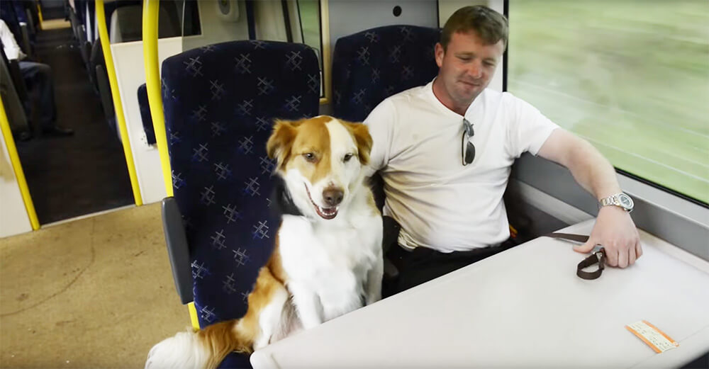 This guy was shocked while on his way to work and running into his dog on the train