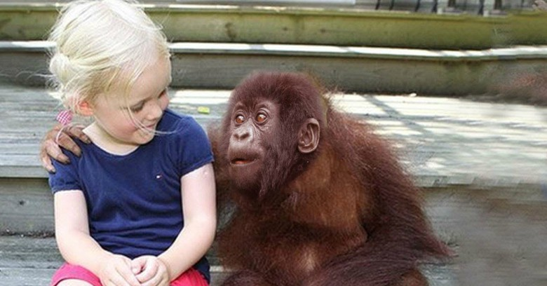 She grew up with gorillas. 12 years later when they reunited? Left me speechless!
