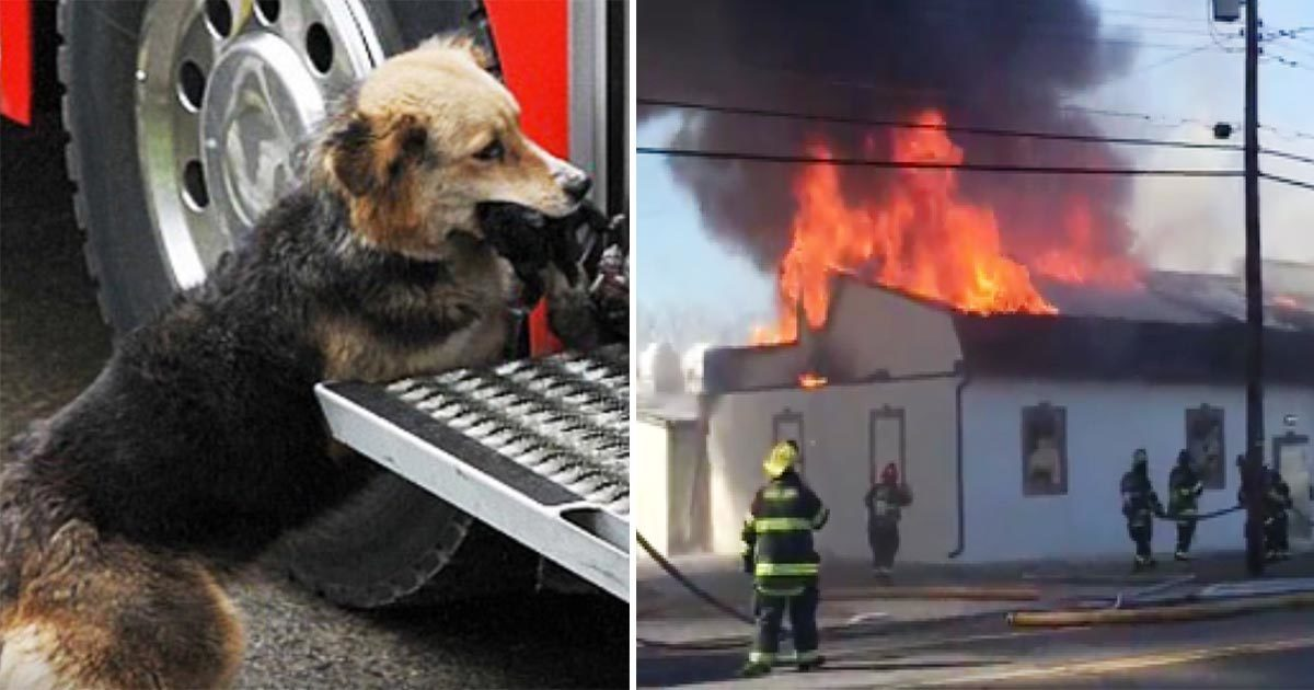 Firefighters were fighting a fire that raged inside the house - and then they saw this dog carrying something in her mouth