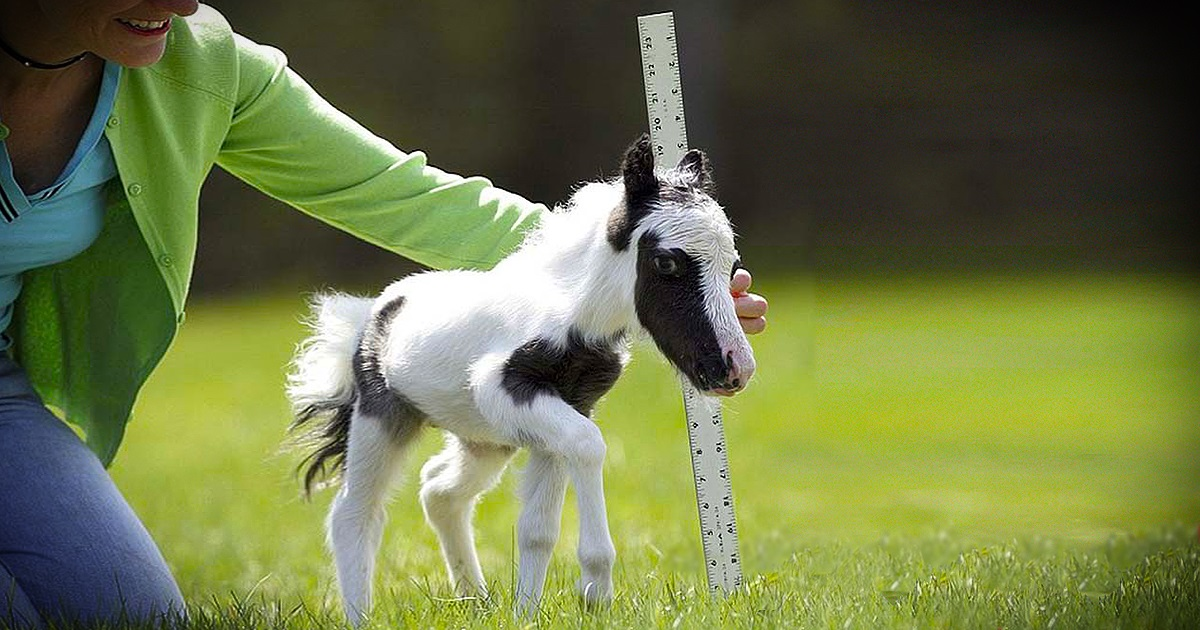 This is the smallest horse in the world, and you can't NOT fall in love with it