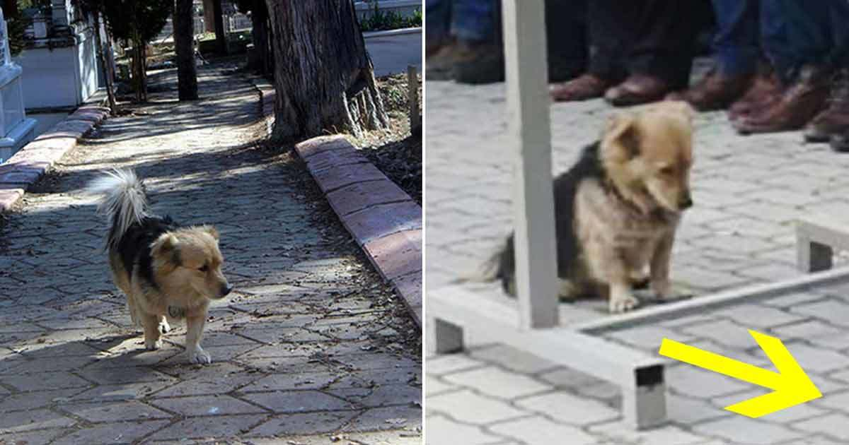 He didn't understand where his dog was going every day - so he followed him and discovered the heartbreaking truth
