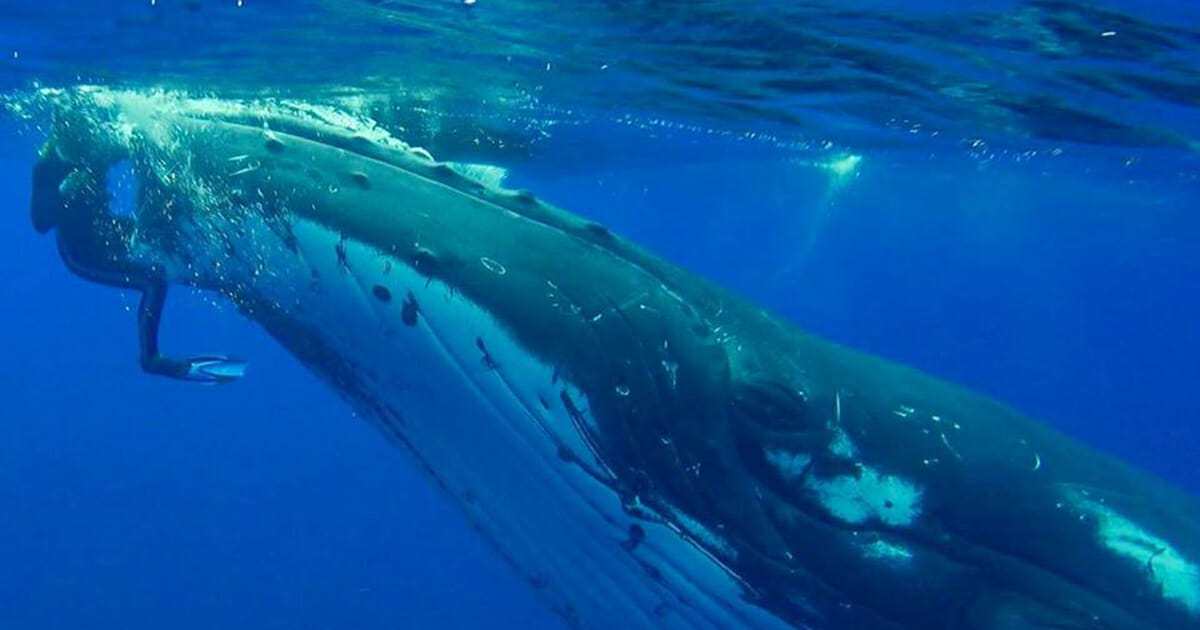 Whale threw himself at a woman - when she understood why, she couldn't stop the tears
