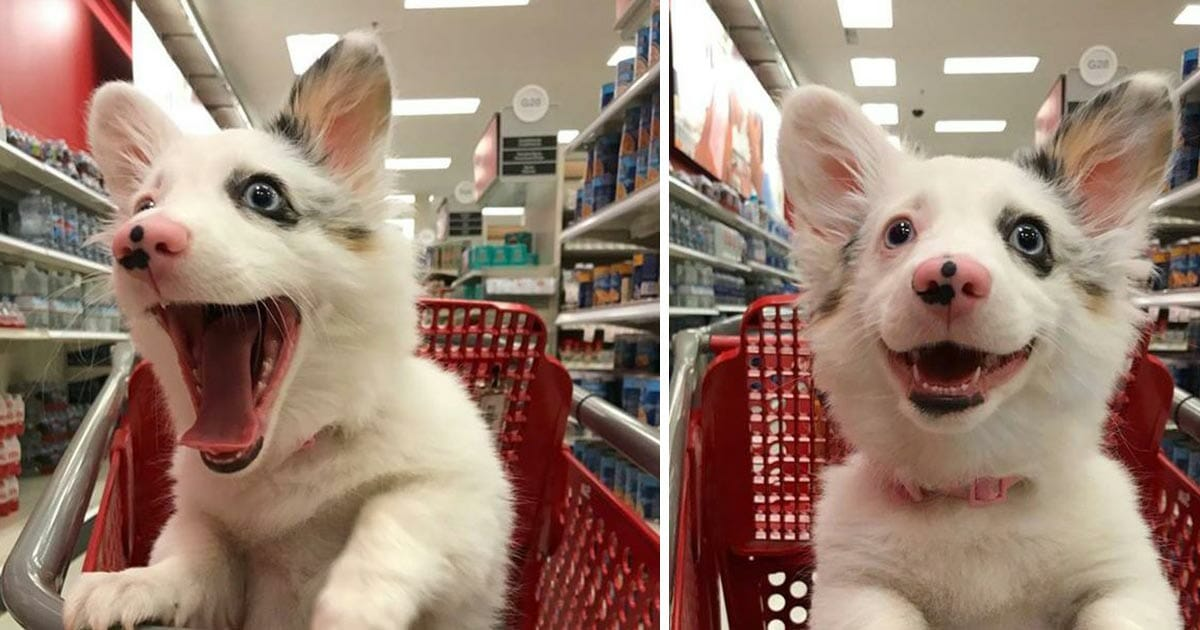 Mom took a 4-month-old puppy to shopping at the supermarket, her reaction melted people all around the world