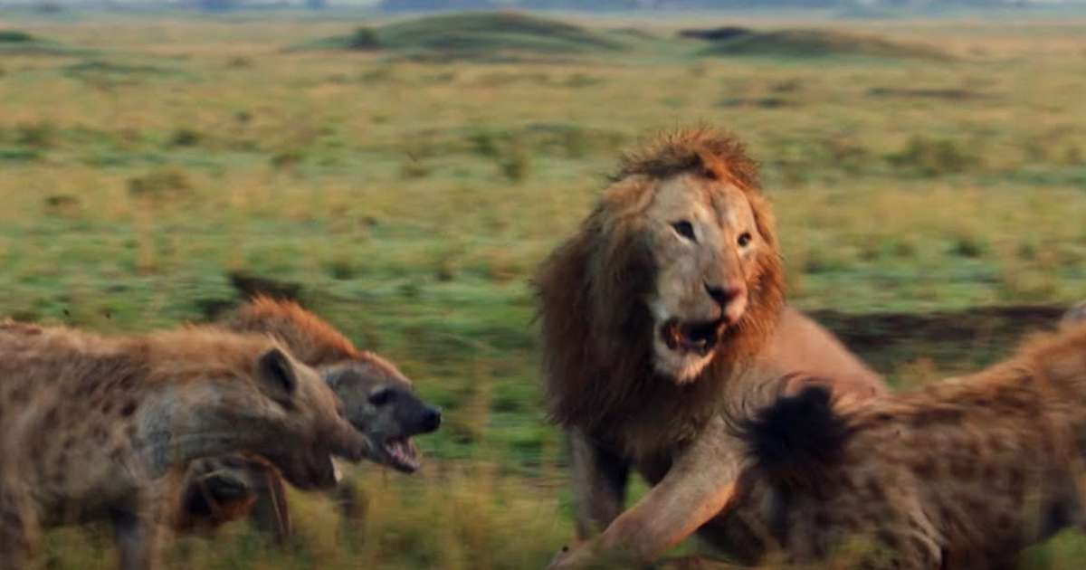Lion struggles fighting 20 hyenas, so his friend comes with style like a hero and saves the day