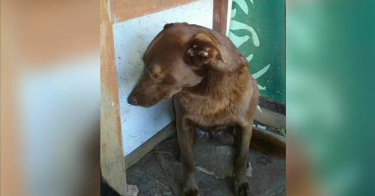 Depressed dog was sitting alone in a dog shelter for 2 years: then she suddenly smelled something familiar