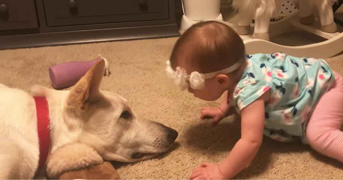 A baby didn't stop kissing the dog's nose - no one expected the dog to react like this
