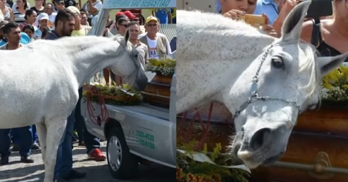 The heart breaks as a horse smelled his owner's coffin, couldn't stop crying and broke into pieces