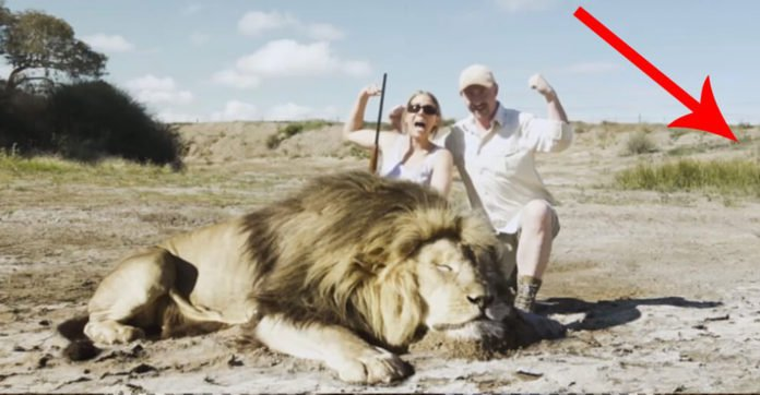 2 hunters photographed with a dead lion, but then they got a taste of a revenge they never expected