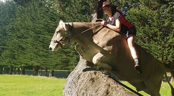 Her parents refused to get her a horse, so she tamed her cow instead