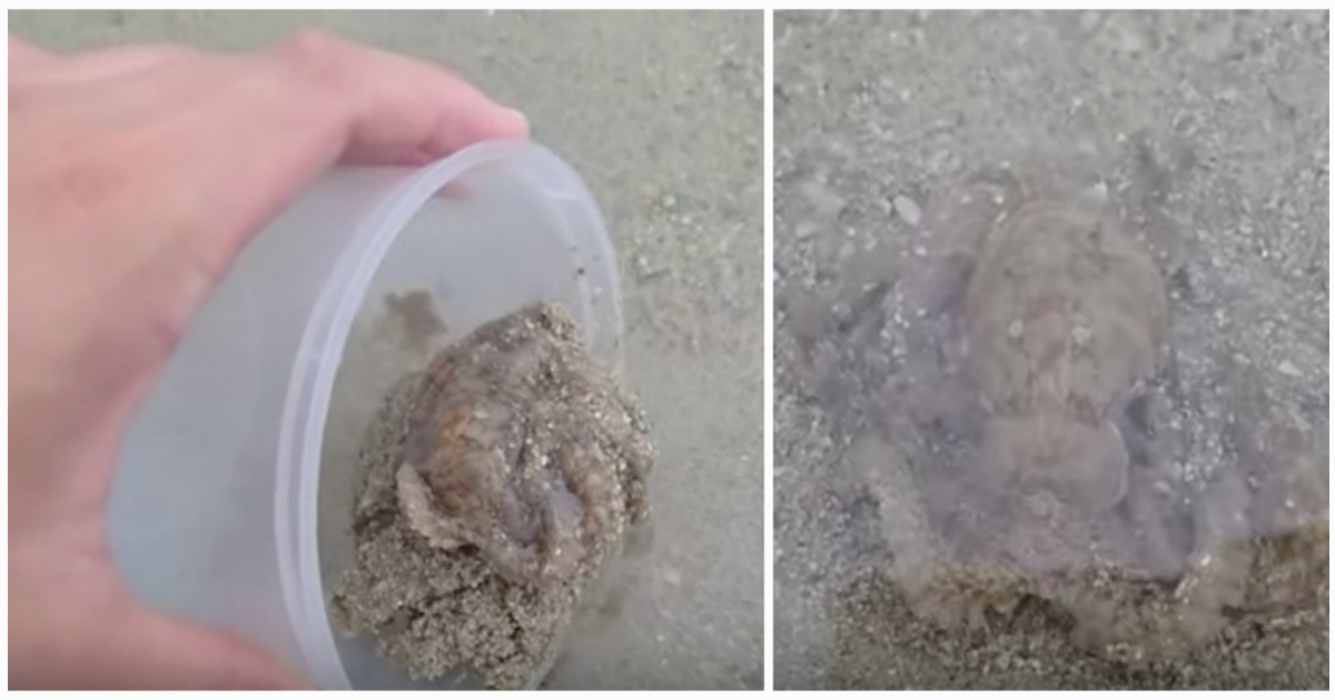 Man saved the life of an octopus that was abandoned on the beach - the octopus thanked him in a way he'll never forget