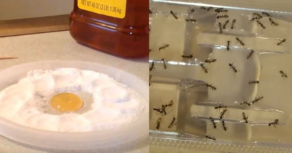 You'll never see another cockroach, ant or flea again - a cheap and simple solution with one natural ingredient!