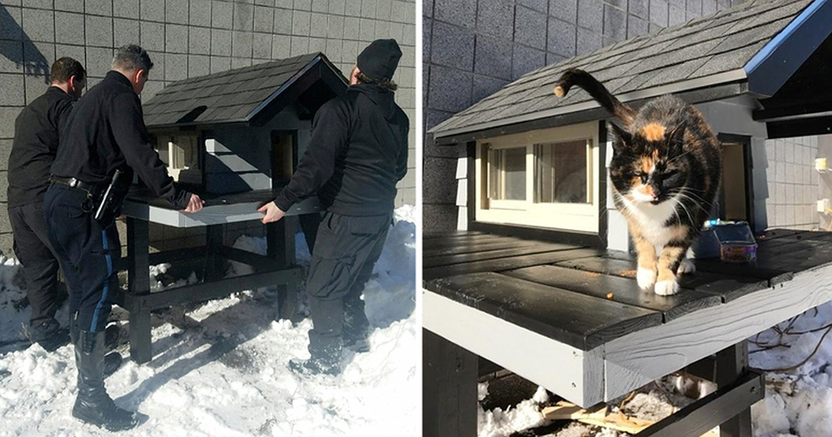 A stray cat arrived in a police station, but instead of chasing her away, the cops built her an amazing house!